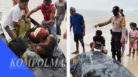 Evakuasi mayat korban di pantai Dusun Jebu Laut