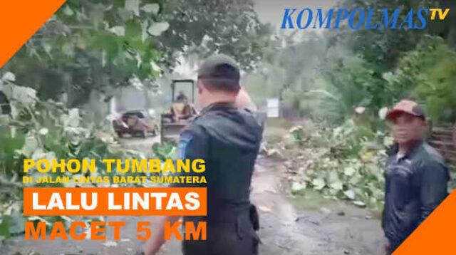 Bahu-membahu menyingkirkan pohon tubang di Jalinbar Sumatera