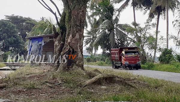 Sebanyak 37 pohon besar di pinggir jalan poros kawasan Sawah Lebar Kecamatan Seginim terpantau tidak dalam kondisi mantap berdiri, dan diprediksi bisa tumbang kapan saja
