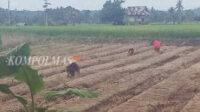 Dayung Serunting mulai menyiapkan sentra produksi benih porang untuk Program Porang Rakyat, di Desa Muara Danau, Kecamatan Seginim, Kabupaten Bengkulu Selatan
